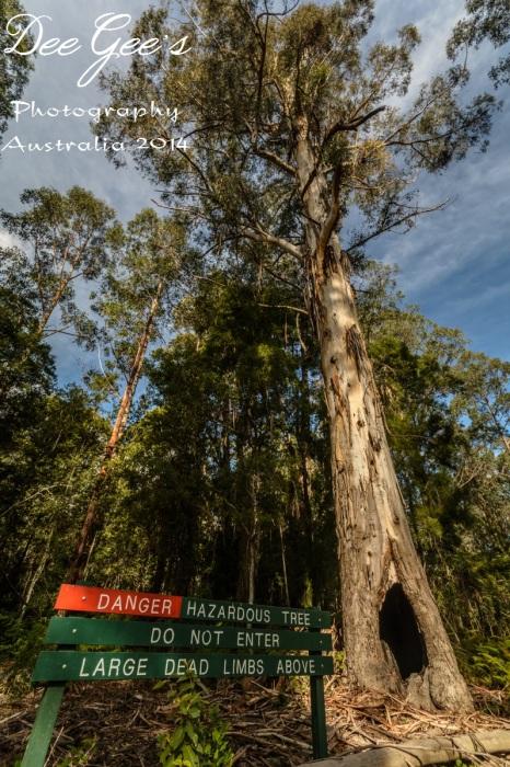 WM Dangerous Tree