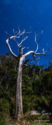 WM Ghost Tree