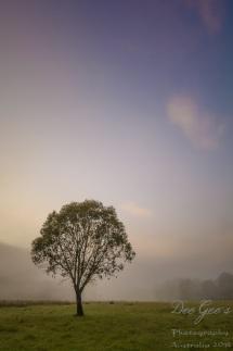 Misty Dawn Tree