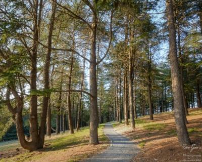 WM Arboretum