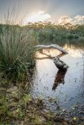 WM Saltwater Creek