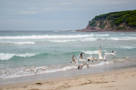 WM Seagulls Taking Flight