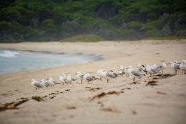 WM Seagulls