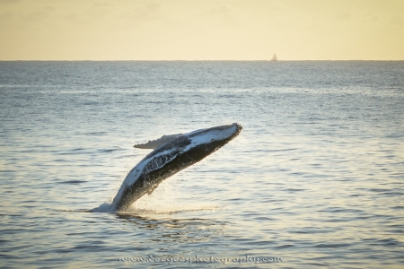 Sunrise Whale Leap