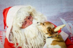 santa-paws-2016-sml-24