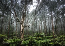South East Forests